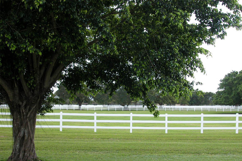 grove-creek-ranches-tree